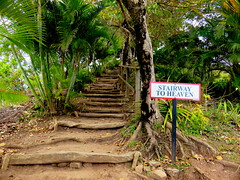 Jimmy Page, present only in spirit (oobwoodman) Tags: path hike trail caribbean sentier stlucia naturewalk pfad carabes westindies karibik saintlucia tetpaul