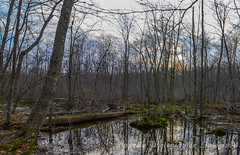 Waterloo Swampy pond view (eppelsauce3966) Tags: trees nature spring nikon tokina waterloo bog swampy 1116mm d7000