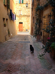 The morning had caught him unawares (*CA*) Tags: italy cat pienza