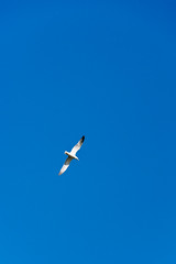 Set free (lorenzoviolone) Tags: sky italy roma bird flying reflex wings nikon seagull dslr clearsky lazio fujiastia100f vsco d5200 nikkor18105mm nikond5200 vscofilm walk:rome=april2016