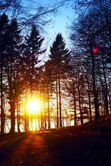 P1174807 (abory03) Tags: winter light sunset lake de soleil belgium belgique dam coucher olympus lacs paysage barrage omd charleroi em1 leau dheure
