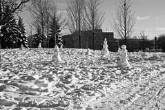 La fabrique de bonhommes de neige/Ah, look at all the lonely people (bob august) Tags: winter bw snow canada blackwhite snowman nikon montral noiretblanc hiver qubec neige janvier bonhommedeneige 2016 villeray d90 parcjarry montreal nikkor18135mm nikond90 aperture3 2016rpdaoust