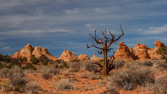 Tree and Red Rock Teepees (Jeffrey Sullivan) Tags: travel november red arizona copyright southwest tree jeff nature rock digital canon landscape dead photography rebel photo sandstone desert bureau outdoor conservation roadtrip 2006 hike management american land lands fredonia teepee sullivan exploration formations blm bureauoflandmanagement xti wwwjeffsullivanphotographycom seeblm blmproud