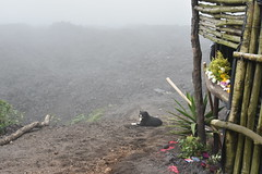 DSC_5628 (Kent MacElwee) Tags: dog latinamerica volcano highlands guatemala antigua centralamerica pacaya lavarocks activevolcano volcanpacaya lavastore