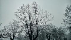 Tree (filip.avramovic2002) Tags: trees mist tree fog forest woods