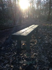 A Walk in Sandall Beat Wood - Doncaster (Simon Caunt) Tags: trees sun sunlight woodland bench path walk seat sunbeams doncaster southyorkshire itsgrimupnorth woodlandwalk restawhile sandallbeatwood sunnydonny