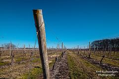 Pindar Vineyards (Rod Richardson) Tags: wine northfork pindar