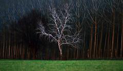 (tozofoto) Tags: trees sunset colors field canon landscape lights europe hungary shadows springtime zala tozofoto