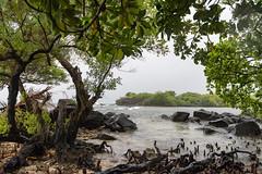 Stormy Nan Madol (Warriorwriter) Tags: water rain stone wonder day cloudy overcast unesco jungle fsm fm basalt monoliths worldheritage micronesia oceania pohnpei nanmadol federatedstatesofmicronesia