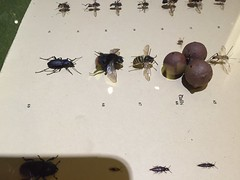 Insects (quimby) Tags: art museum gallery potteries