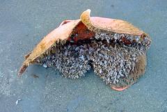 052014-03 (johnchapman3335) Tags: june japan japanese washington marine debris tsunami moclips 2013 jtmd june2013 japanesetsunamimarinedebris