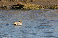 Image-44.jpg (PiperArcher2273) Tags: kingslynn titchwellmarsh