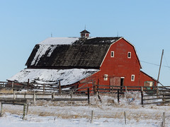 The best colour to see in winter (annkelliott) Tags: winter red snow canada building architecture barn rural fence wooden outdoor alberta oldbarn collapsing ruralscene annkelliott anneelliott fz200 eofcalgary fz2003 25january2016