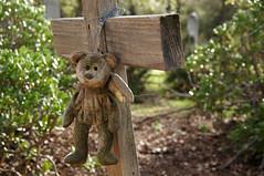 """Angel of God Oct. 28, 1913 Name Unknown"" (nedlugr) Tags: california ca ojaicalifornia ojai cross cemetery bear angelbear usa teddybear"