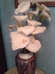 ramo de calas (javierortegaferrandez) Tags: planta flor ramo