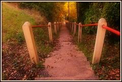 Chemin de traverse (Les photos de LN) Tags: nature traverse arbres passage campagne escalier chemin fort marches raccourci
