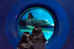 Meet the shark (Yuta Ohashi LTX) Tags: blue japan kids aquarium shark nikon f14 voigtlander jaws d750 日本 fixed 58mm nokton 水族館 ibaraki focal サメ 鮫 茨城 primelens ooarai こども ニコン フォクトレンダー 大洗 単焦点 ノクトン