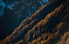 Formaggino Autunnale #1 ( YariGhidone ) Tags: life autumn mountain nature way stars landscape colours outdoor via val milky colori paesaggi montagna refuge conca stelle bivvy bivacco formaggino prali lattea germanasca cialancia