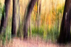 The Manic Forest (klick4) Tags: longexposure blur color forest blury manic
