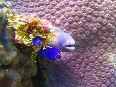 Small Eel (someofmypics) Tags: vacation philippines bikini manila scubadiving wickedweasel ikelite panasonictz60