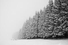 Sur les hauteurs du lac Chauvet II (steph20_2) Tags: bw white mountain black tree monochrome montagne lumix countryside noir noiretblanc ngc central panasonic neige 20mm monochrom paysage arbre blanc sancy massif m43 gh3 skanchelli