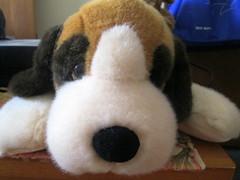 Plush Dog. (dccradio) Tags: dog stuffedtoy animal puppy toy nc northcarolina stuffedanimal picaday pictureoftheday dailyphoto plushtoy photooftheday picoftheday lumberton robesoncounty
