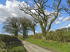 A LANE IN SPRING (conespider) Tags: road uk trees england sky grass clouds outside nikon outdoor hampshire hedge lane gb 2016