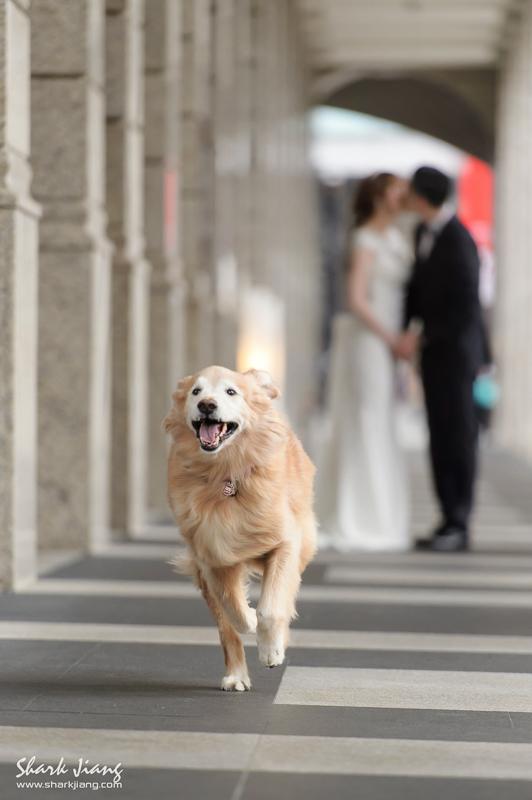婚攝,貴婦百貨婚紗照景點推薦,婚攝鯊魚,婚禮紀錄,貴婦百貨婚紗照