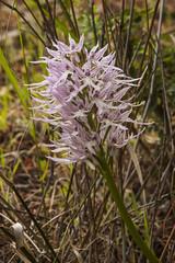 IMG_6047 (petrosli) Tags: flowers flower macro nature closeup canon eos greece eos500d