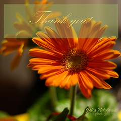 oranjefo-tzvete---thank-you2 (Galia Nikolaeva) Tags: birthday morning flowers plants house holiday plant abstract flower love evening poem bright guitar valentine special thank card setup bouquet indore occasion greeting