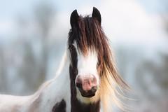'Melanie' (Jonathan Casey) Tags: portrait horse f2 vr 200mm vr1 d810