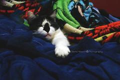 41/365 (JennaAbbottPhotography) Tags: cat 365 365day