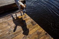 jump for joy (Alexey Dushutin) Tags: life dog lake motion jump funny