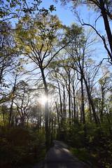 DSC_0992 (julian jones (arkansas)) Tags: travel trees plants sunlight green history nature leaves lines curves perspective shapes ground places trail arkansas height aboretum photowalking