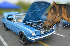 Classic Mustang (swong95765) Tags: horse classic ford car vehicle mustang