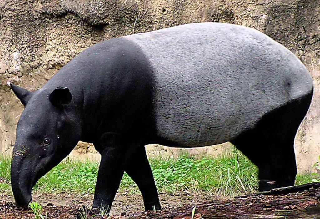 Safari Lâm Đồng
