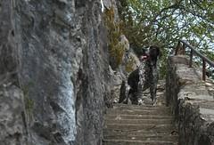 Mastik (bulbocode909) Tags: arbres rochers chiens escaliers