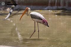 _DSC1625 (rvk82) Tags: 2016 april2016 birds bokeh chennai dof depthoffield guindy guindynationalpark india nikkor70200mm nikon nikond810 photography rvk rvkphotography southindia tamilnadu wildlife in rvkphotographycom