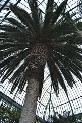 Jardin des Serres, d'Auteuil (carolyngifford) Tags: paris palm glasshouses auteuil jardindesserres