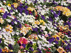 mozirski-gaj_03 (carlo) Tags: flowers olympus slovenia slovenija fiore botanicalgarden omd em1 ortobotanico giardinobotanico mozirje mozirskigaj