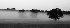 Evening mist of the A811 (Ray Crabb) Tags: trees mist tree mono evening 2014 drymen scotchmist a811
