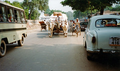 Arrival in Agra (Niall Corbet) Tags: india cow bullock taxi agra cart ambassador