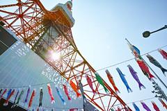 Carp Streamer with Tokyo Tower 1 (wakamsha) Tags: sigma tokyotower dp0q
