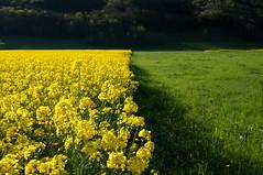 Trichromie (Pierrotg2g) Tags: flowers nature fleurs landscape nikon paysage d90
