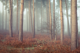 Tunstall forest