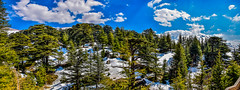 The Cedars Of God, Lebanon (Paul Saad (( ON/OFF ))) Tags: sky lebanon mountain snow tree pano panoramic cedars bshari cedarsofgod