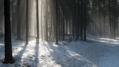 advent (Sergey S Ponomarev) Tags: trees winter light mist snow luz nature fog forest canon landscape woods russia path walk branches natura neve april rays trunks aprile paysage stroll beams paesaggio russie kirov 2016  russland           vyatka    70d    sergeyponomarev ef24105f40l viatka  wjatka