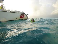 P1020631 (ericvdb) Tags: statepark boat snorkeling floridakeys keylargo johnpennekamp