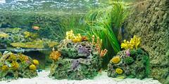 Acuario (Luca Vega) Tags: madrid pez animal zoo zoolgico acuario