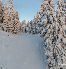 Mount Seymour 2015/16 (jennchanphotography) Tags: travel trees winter sunset wild mountain snow mountains tourism nature vancouver outdoors tourist alpine northshore mtseymour local northvancouver mountseymour jennchanphotography